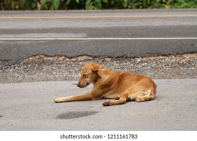 Homeless dog, sickly and hungry on the roadside