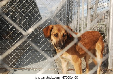 Homeless dog staying alone in front of a fence