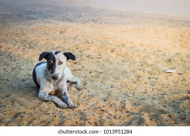 Homeless dog, Stray dogs,Vagrant dog in Thailand,Vagrant Dog Relax on ground.