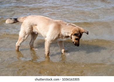 Homeless dog. Summer background