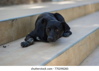 homeless dog/Once Upon a Dog/ without love