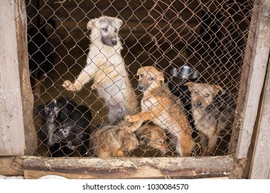 Homeless dogs in the shelter sit in a cage behind bars