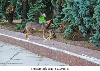 Homeless dogs under the fir tree in park