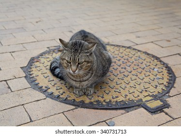 Homeless gray cat sits on a sewer manhole