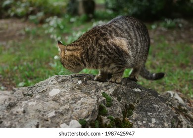 A homeless gray tabby cat eats food on a rock in the park. Help and feed wild animals. The concept of caring and caring, showing kindness, pity. A hungry little kitten eats wet food. Close-up portrait