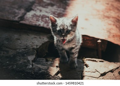 homeless gray tabby kitten on the street in ruins causes pity and sadness