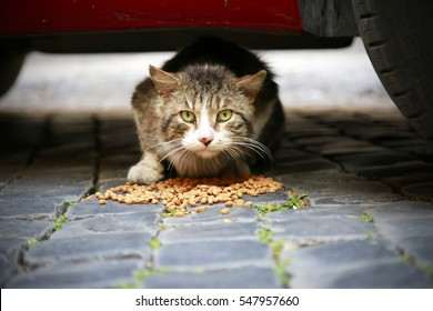 homeless hungry cat eating cats food under a car