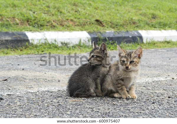 Homeless kitten sitting on the warm asphalt road. Stray cat turned his head