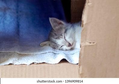 Homeless Kitten Sleeping in a Cardboard Box