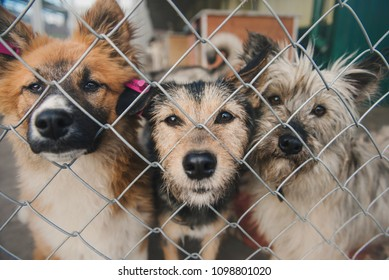 Homeless mongrel dogs is sitting on a cage in animal shelter