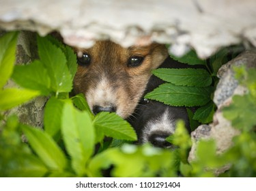 Homeless puppies hide from people. Dogs look from their caches. Street dogs hid in the grass. Nose and eyes of the dog