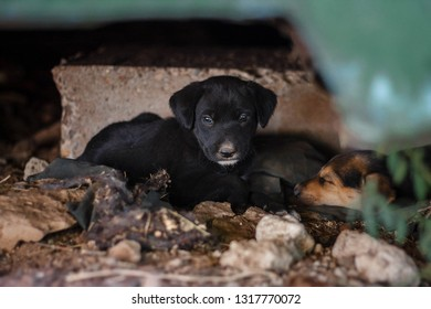 homeless puppies strollers starve and live on the street, do not have homes and owners