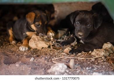 Puppies In A Stroller Images Stock Photos Vectors Shutterstock