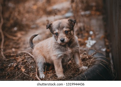 homeless puppy does not have homes and owners