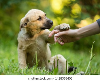 homeless puppy mixed breed mutt dog giving paw to human hand