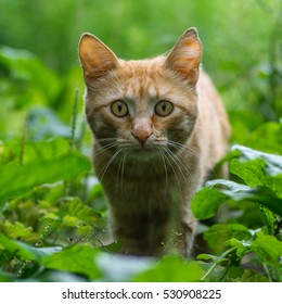 Homeless red cat in the grass