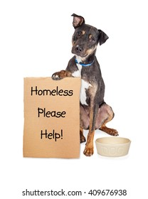 Homeless rescue dog holding sign with empty food bowl