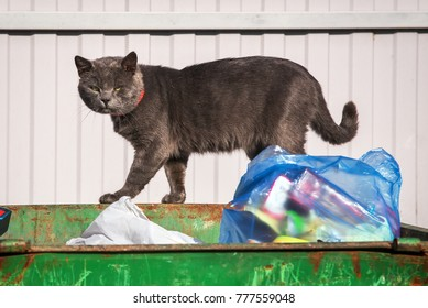 A homeless sad cat on the garbage can