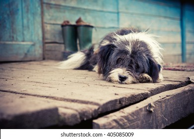 Homeless sad dog lying on a wooden porch.