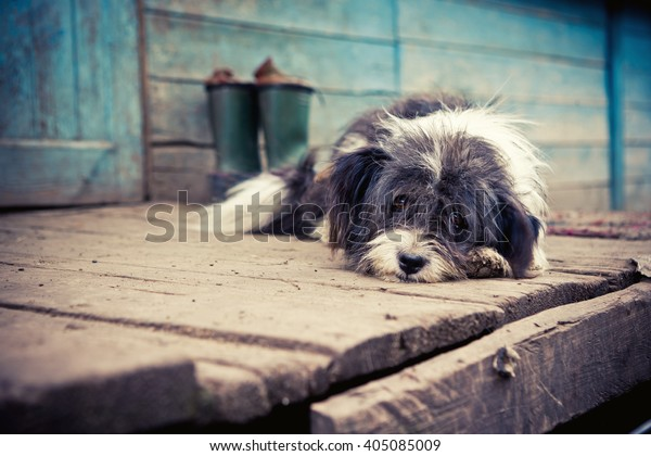 Perro triste sin hogar en un porche de madera.