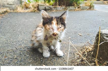 Homeless sick kitten in an urban environment
