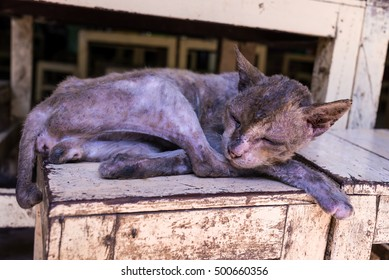 homeless Skinny sick cats sleep on wood chair