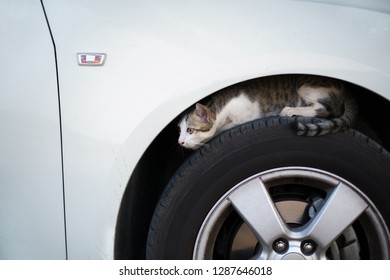 Homeless Stray cat hiding in car wheel looking for something.