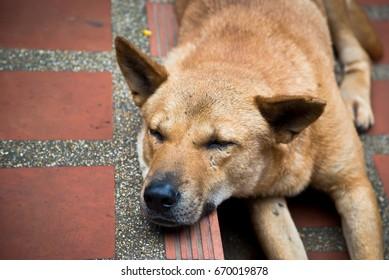 homeless stray dog sleeping on the street