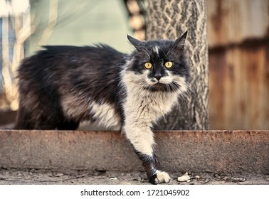 Homeless street cat close-up. Stock photo of a stray spotted cat. Dirty cat. The concept of protecting stray animals. Abandoned urban background.