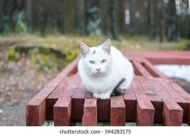 The homeless White cat with spots and beautiful azure eyes sits on a bench on the street