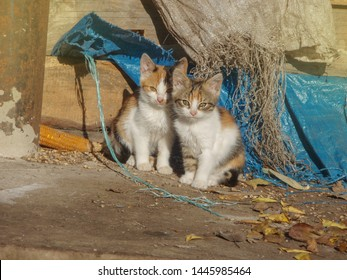 Homeless wild cats on dirty street.  Stray cats  in the city. Group homeless cats. Friendly cats on the street.