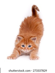 Homelessness Red kitten stretches isolated on a white background
