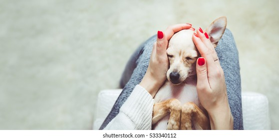 Homely relax. Small dog in sleeps in woman hands.Forever together