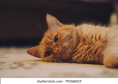 homemade ginger cat lying on the floor. emotional portrait. the Wallpapers and posters