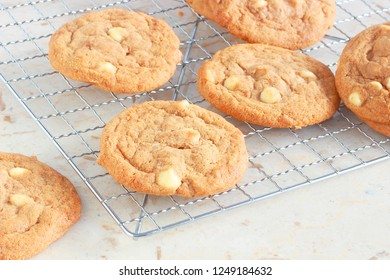 Homemade ginger and white chocolate cookies cooling on rack, delicious enough to serve as a dessert during your holiday meal or pack with the kids lunch