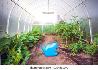 homemade greenhouse for vegetables Seedlings of tomato Growing in the greenhouse