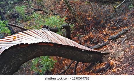 Homemade Mountain Bike Ramp Buint On An Old Fallen Oak Tree Over A Mountain Trail