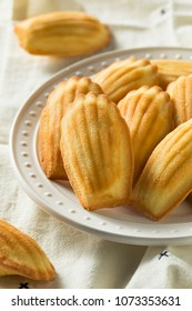 Homemade Sweet French Madeleines Ready to Eat