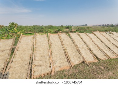Homemade Vietnamese rice vermicelli drying in the sunlight on bamboo fences near banana farm outside of Hanoi, Vietnam. Special organic noodles are being dried naturally