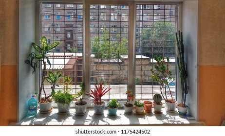 Homeplants in pots on window sill