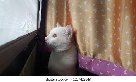 a homesickness cat.