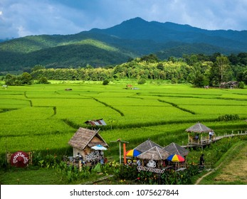 Homestay Farm and Coffee Shop is located in front of Wat Phuket, Pua District, Nan, which is called Toob na Tai Lue and Toob na Coffee In the atmosphere of the field, nan, Thailand, Sebtember 2017