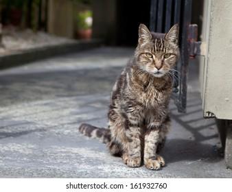 homless cat