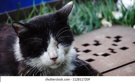 Homless Cat alone sad