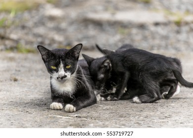 A homless cat with her baby living sidelong .