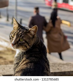 homless cat in Istanbul