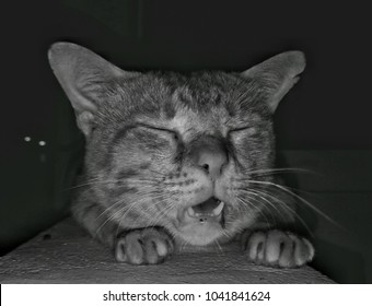 Homless cat portrait