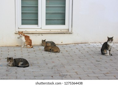 Homless cats sit on the street