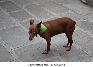 homless dog with green neckerchief