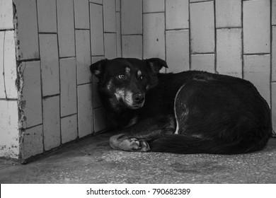 homless dog lies in underground